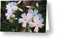 White Floral Lights Greeting Card