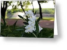 White Flowe Greeting Card