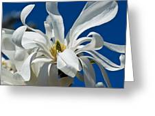 White Flower Blue Skies Greeting Card