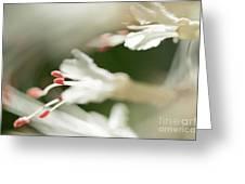 White Bottlebrush Buckeye Greeting Card