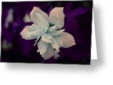 White Flower W/purple Background Greeting Card