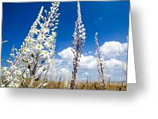 White Flowering Sea Squill On A Blue Sky Greeting Card