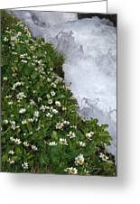 White Flowers And Water Greeting Card