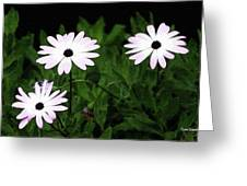 White Flowers In The Garden Greeting Card