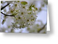 White Flowers On A Tree Greeting Card