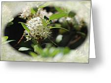 White Flowers On Canvas Greeting Card