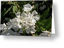 White Flowers On Green Leaves Greeting Card