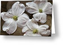 Dogwood White Flowers On Stones Greeting Card