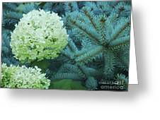 White Flowers W14 Greeting Card