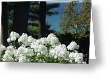 White Flowers W16 Greeting Card