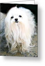 White Fluff Greeting Card