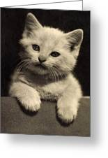 White Fluffy Kitten Greeting Card