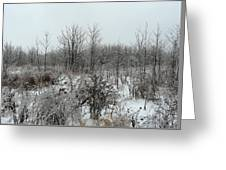 White Forest In Freezing Rain Greeting Card