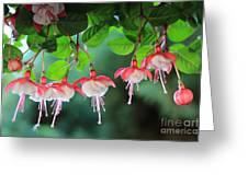 White Fuchsia Greeting Card