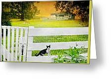White Gate Cat Greeting Card