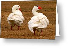 White Geese 1 Greeting Card