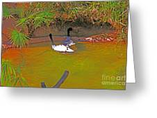 White, Geese, On, Pond Greeting Card