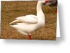 White Goose 2 Greeting Card