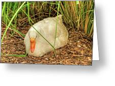 White Goose By Pond Greeting Card