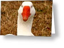 White Goose Close Up 1 Greeting Card