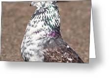 White-gray Pigeon Profile Greeting Card