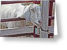 White/grey Goat Head Through Fence 2 6242018 Goat 2420.jpg Greeting Card