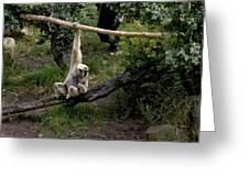 White Handed Gibbon 1 Greeting Card