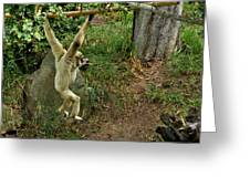 White Handed Gibbon 3 Greeting Card