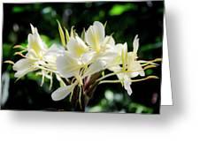White Hawaiian Flowers Greeting Card