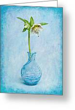 White Hellebore Greeting Card