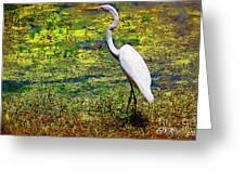 White Heron 1 Greeting Card