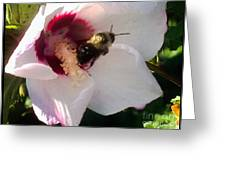 White Hibiscus Bloom With Bumble Bee Greeting Card