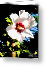 White Hibiscus High Above In Shadows Greeting Card