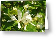White Honeysuckle Blossoms Greeting Card