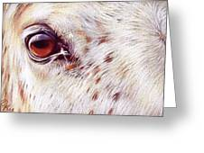 White Horse Close-up Greeting Card