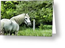 White Horse In A Green Pasture Greeting Card