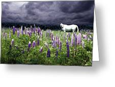 White Horse In A Lupine Storm Greeting Card