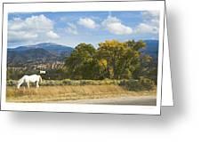 White Horse Greeting Card