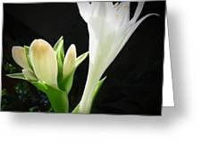 White Hostas Blooming 7 Greeting Card