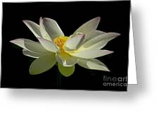 White Hot And Graceful Greeting Card