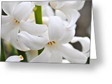 White Hyacinth Greeting Card