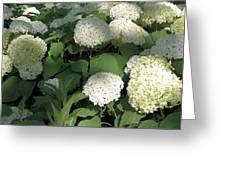 White Hydrangea Bush Greeting Card