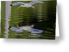 White Ibis And Reflection Greeting Card