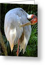 White Ibis At The Zoo Greeting Card