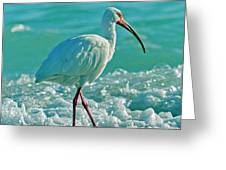 White Ibis Paradise Greeting Card