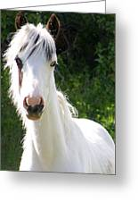 White Indian Pony Greeting Card