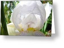 White Iris Flower Art Print Sunlit Irises Baslee Troutman Greeting Card