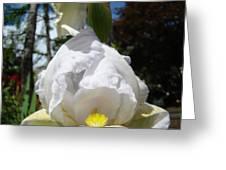 White Iris Flower Art Prints Canvas Irises Artwork Greeting Card