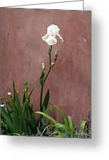 White Iris In New Mexico Greeting Card