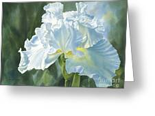 White Iris Greeting Card by Sharon Freeman